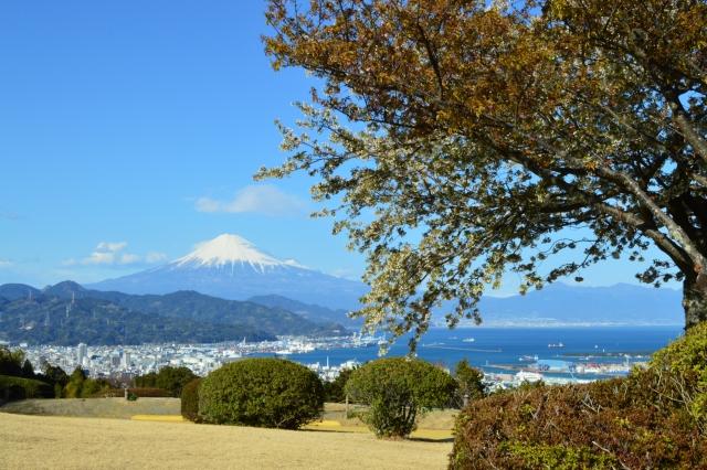富士山 桜 日本平