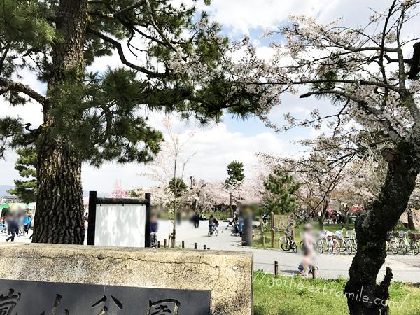 嵐山公園 桜