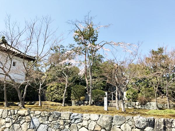 天龍寺境内 桜