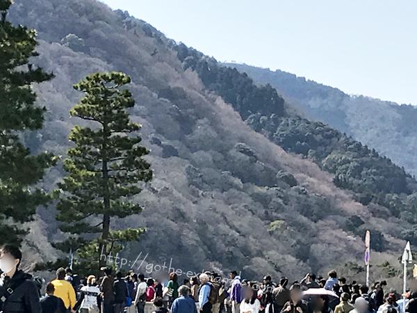 嵐山の桜 4月3日