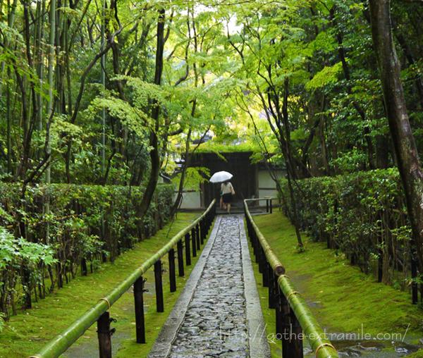 雨 京都 高桐院