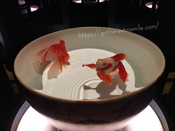 九谷焼金魚品評