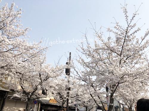 嵐電 嵐山駅前通り 桜まつり