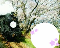 川根 SL 桜