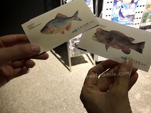 京都水族館 チケット